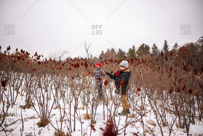 A little boy with a red scarf looking at red sumac with brother in background
