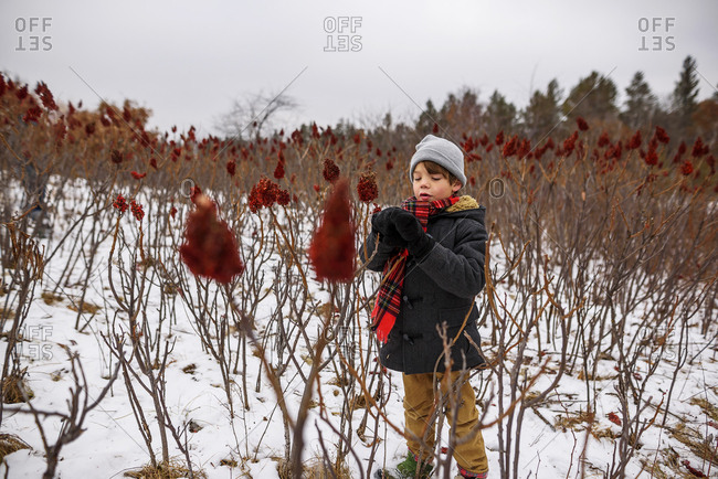 A little boy with a red scarf looking at red sumac