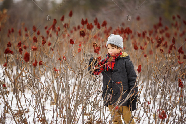 A young boy with a red scarf looking at red sumac