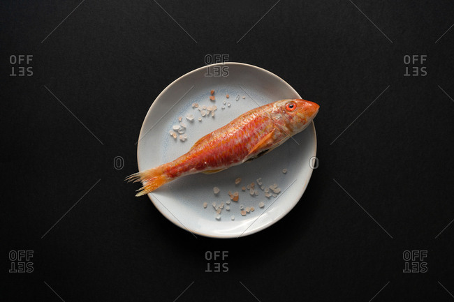 Fresh red fish lying on ceramic plate with salt crystals on black background