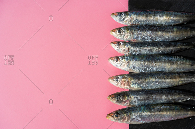 Bunch of fresh salty anchovies lying in line on pink background