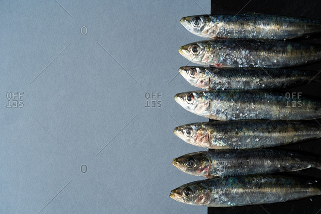 Bunch of fresh salty anchovies lying in line on gray background