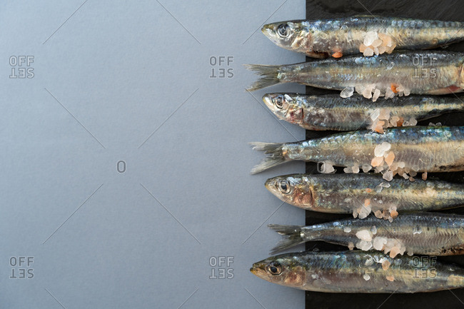 Bunch of fresh salty anchovies lying in line on black background