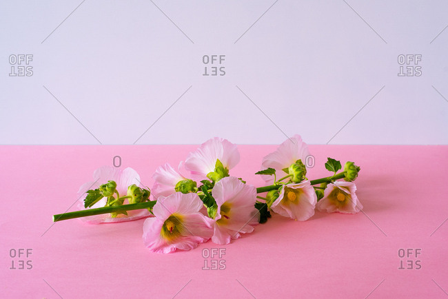 Pink flowers in a pink background