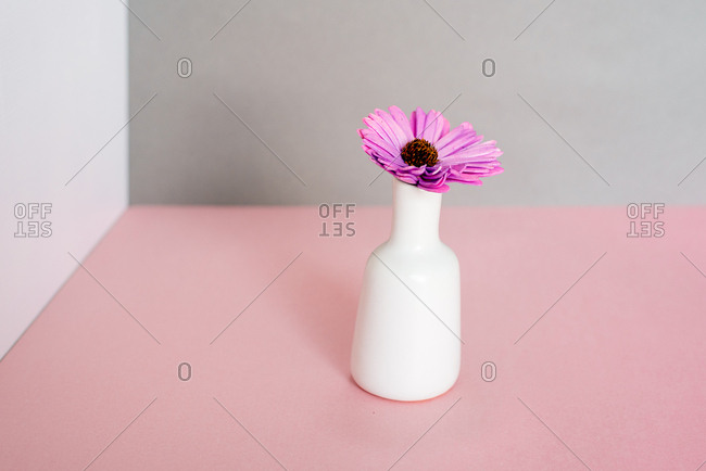 Violet daisy flowers in a multicolor background