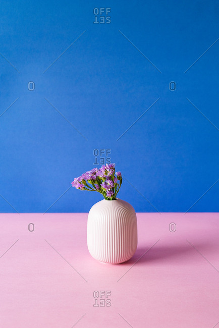 Violet sea lavender flowers in a pink and blue background