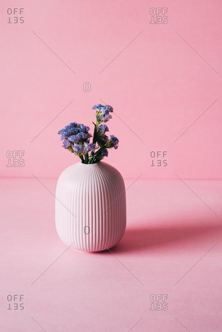 Violet sea lavender flowers in a pink background