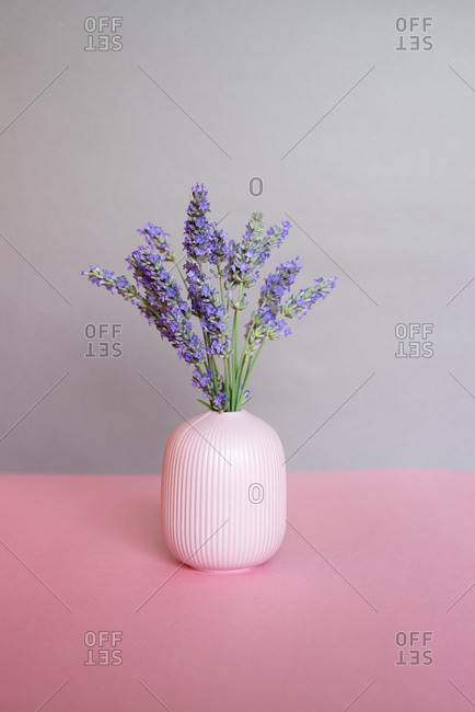 Vase of lavender flower in a pink and grey background