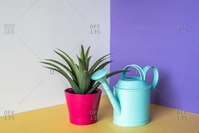 Aloe vera plant with water can in a multicolor background