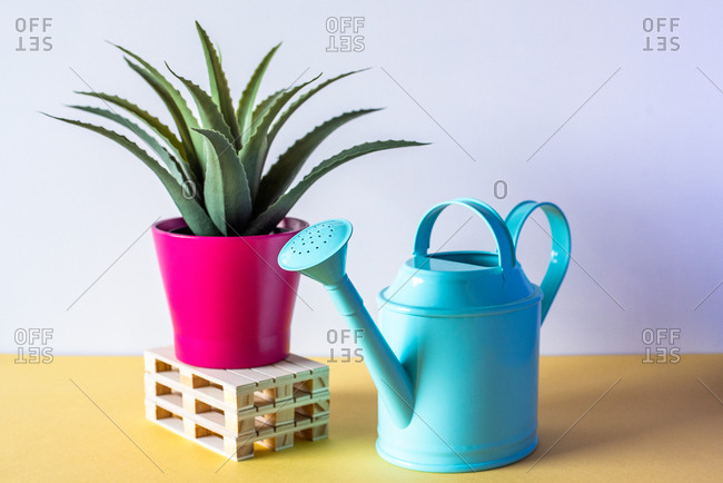 Aloe vera plant on top of pallets with water can in a colorful background