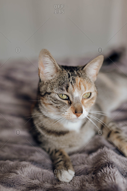 Sweet cat lying on soft blanket on comfortable bed at home