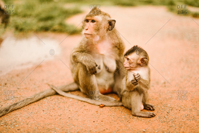 Monkey and baby sitting on ground near green plants on blurred background