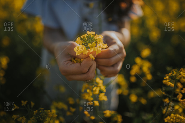 Unrecognizable young lady holding delicate yellow flowers while standing in amazing meadow on sunny day