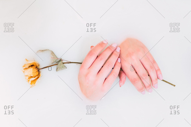 Closeup hands of anonymous woman washing in delicate white water with dried yellow rose