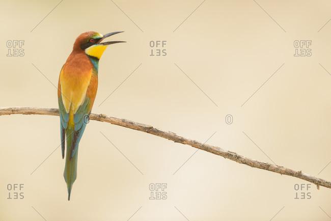 Bird standing on tree branch