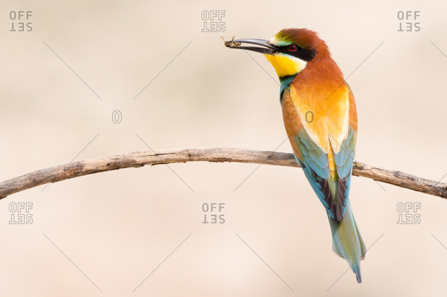 Bird standing on tree branch