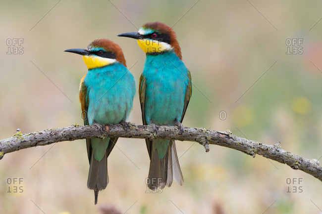Birds standing on tree branch