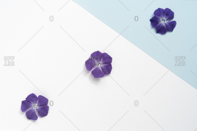 Flat lay arrangement of beautiful flowers on colorful background