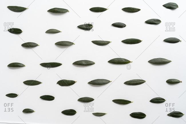 Leaves on plain background - Offset