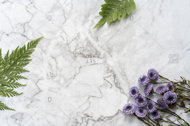 Flat lay arrangement of ferns and flowers on marble background