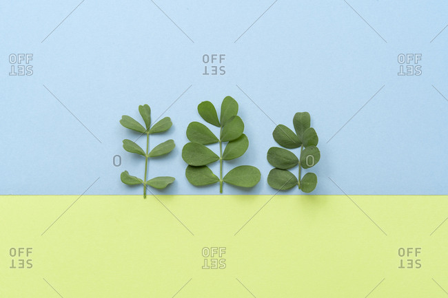 Flat lay arrangement of leaves on plain colors background