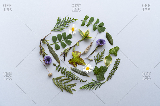 Various types of spring leaves arranged in a circle