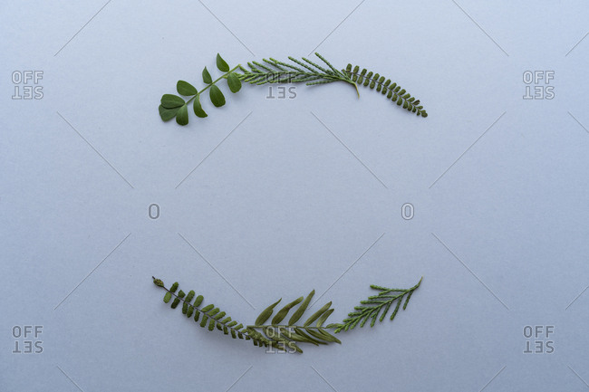 Leaves arranged in arches on a plain background