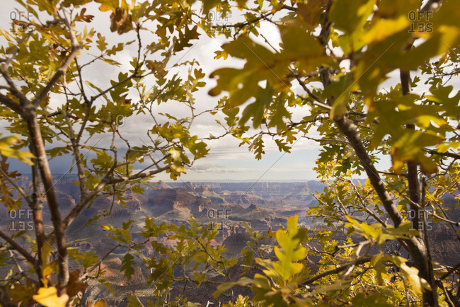 View through autumn trees of the Grand Canyon