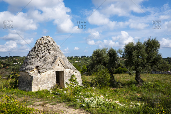 Trullo, traditional Apulian house abandoned near olive trees