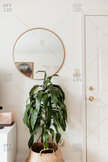 White interior with large housplant and mirror.