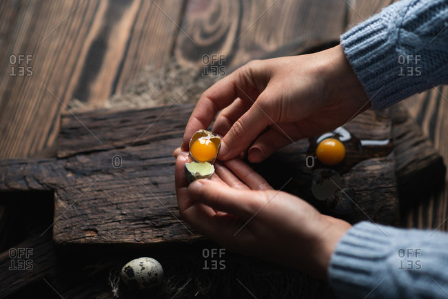 Unrecognizable woman holding broken quail egg with bright yolk in her hands over dark wooden background, view from above