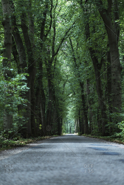 Green tree lined road