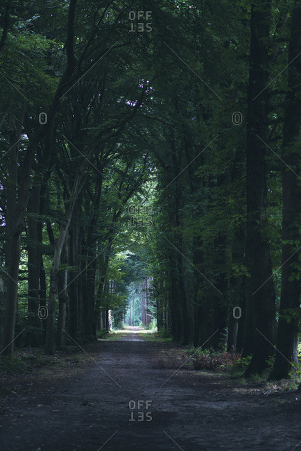 Dark tree lined path in the woods