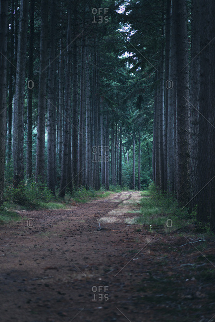 Tree lined path in the woods