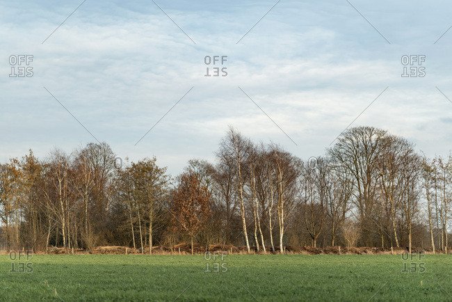 Bare trees on the edge of a field
