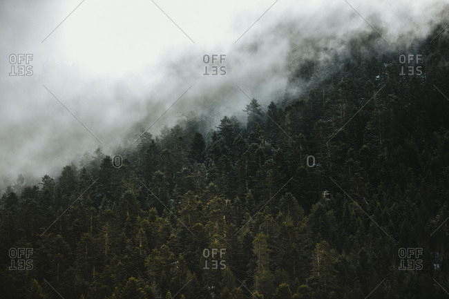 Dense woods covered in fog in the Pyrenees