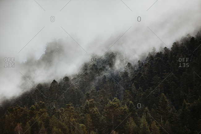 Forest covered in fog in the Pyrenees