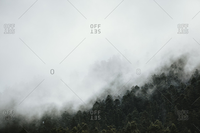 Dense fog covering forest in the Pyrenees