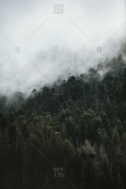 Fog covering trees in a forest in the Pyrenees