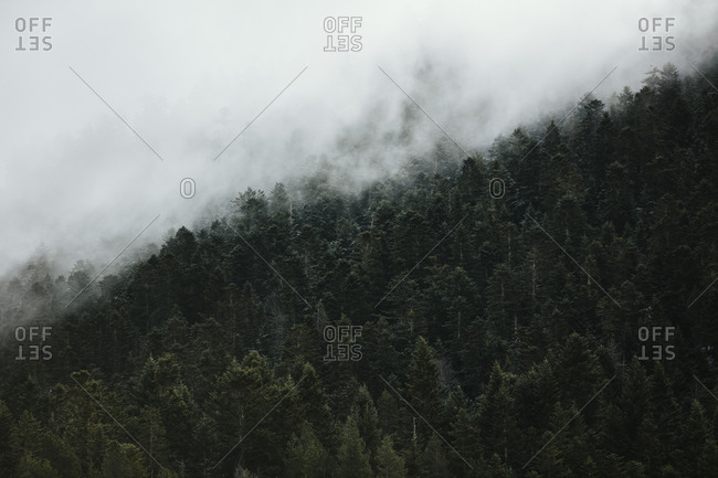 Forest covered in dense fog in the Pyrenees