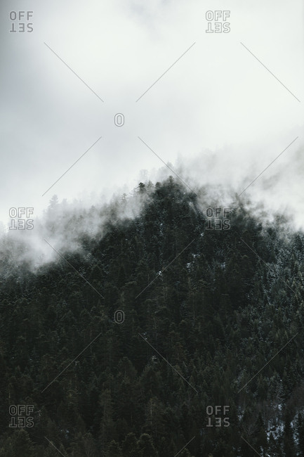 Dense fog above trees in a forest in the Pyrenees