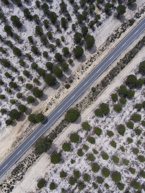 Aerial view of a rural road and trees