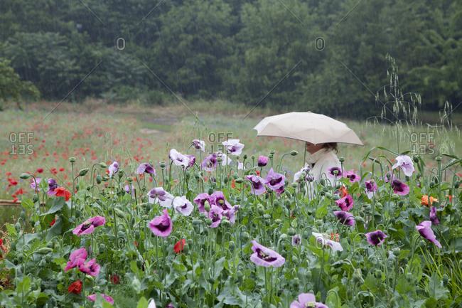 Woman walks through field during rain, Vernon, France