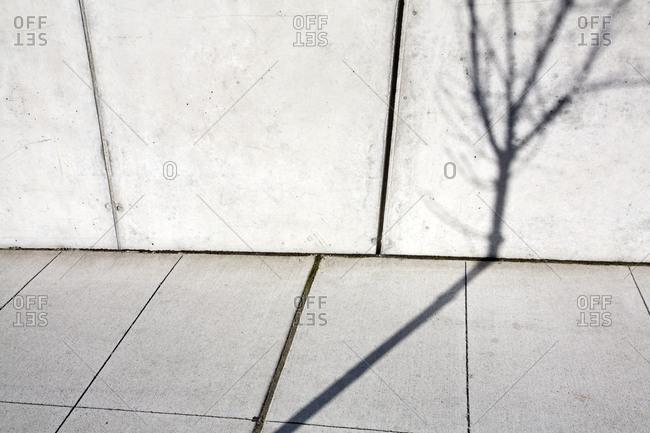 Tree Shadow on Wall,Seattle, Washington, USA