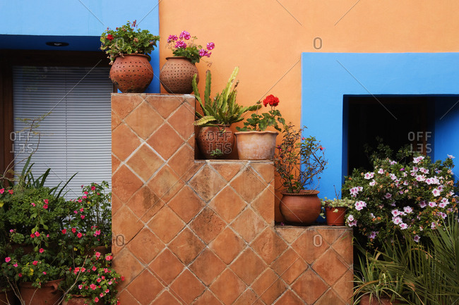 Potted Plants Against Colorful Wall,Chiapas, Mexico