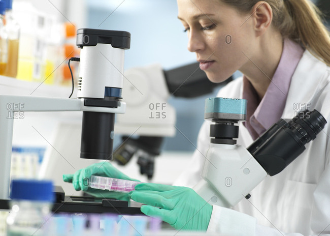Cell Research- Scientist placing a multi well plate under the microscope ready to examine cells in the laboratory
