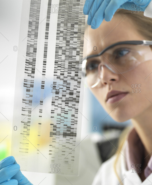Scientist examining the results on a DNA autoradiogram in the laboratory