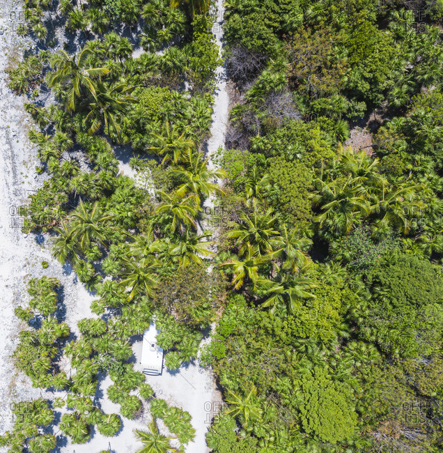 Mexico- Yucatan- Quintana Roo- Tulum- drone view of beach with palm trees
