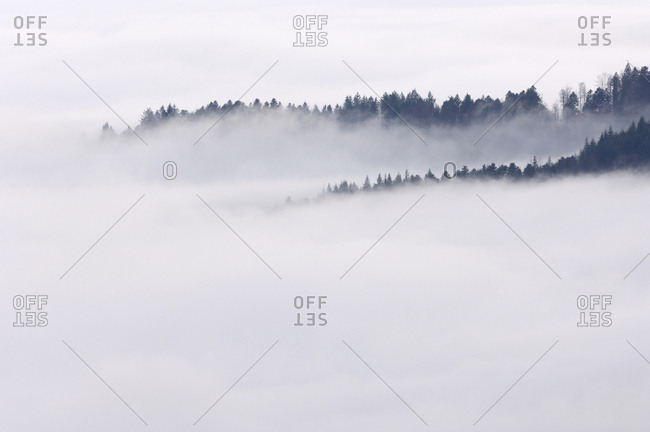 Germany- Baden-Wurttemberg- Forest trees standing out of fog in the valley- Black Forest