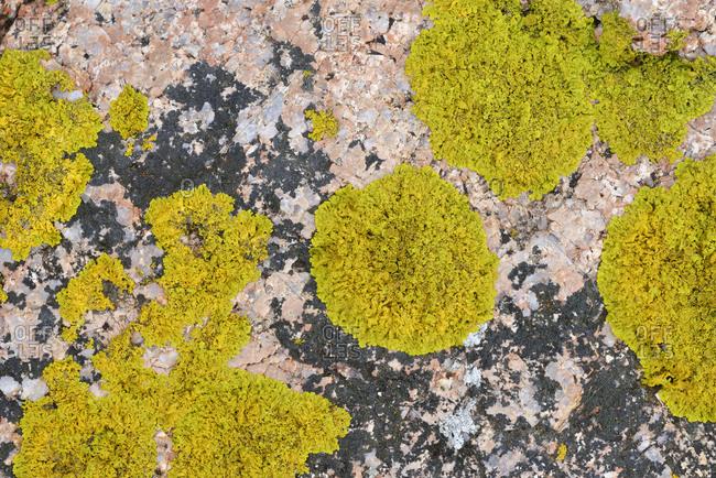 Italy- Sardinia- Lichen on granite rock